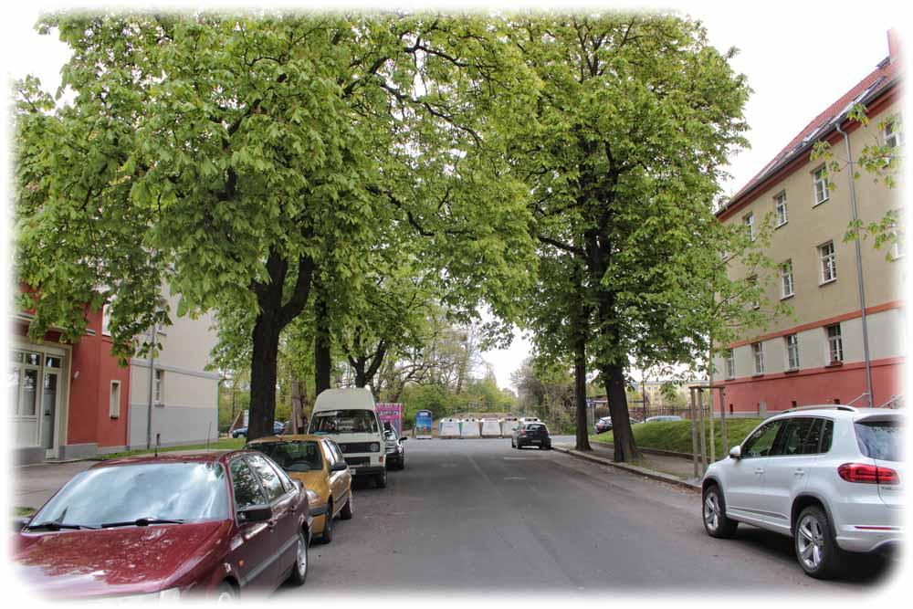 Für die Umleitung will die Stadt für etwa 1,5 Jahre die Schulze-Delitzsch-Straße über den alten Elbarm in Richtung Steirische Straße verlängern. Foto: Heiko Weckbrodt
