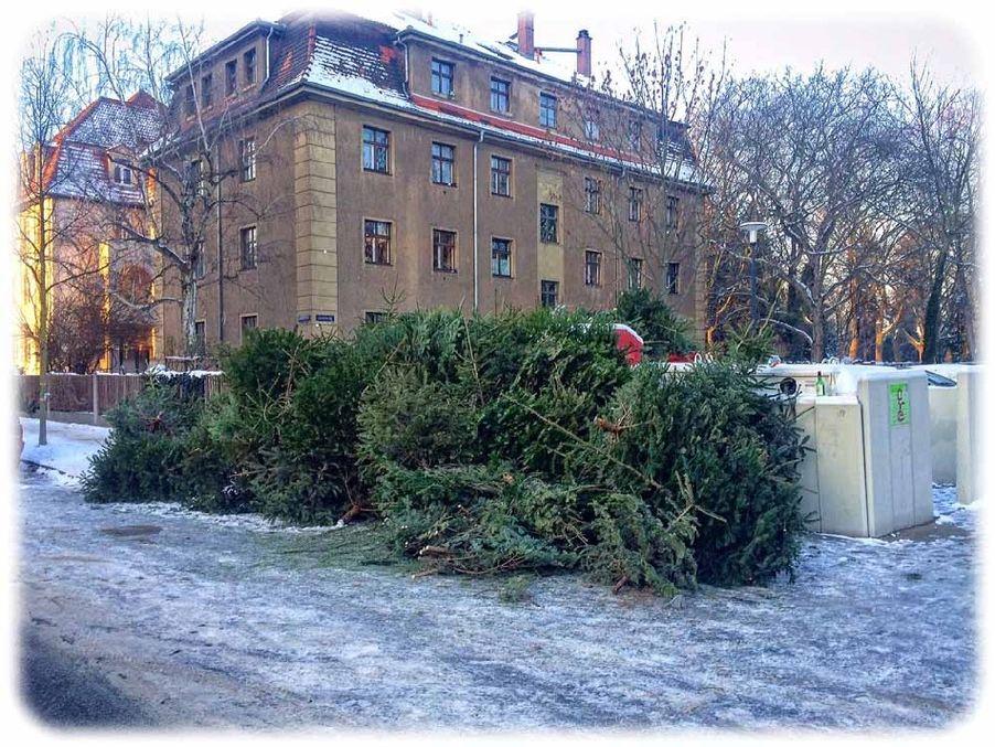Demo der verbannten Weihnachtsbäume in Striesen an der Ecke Lauensteiner und Kipsdorfer Straße. Foto: Heiko Weckbrodt