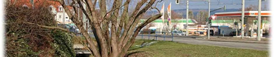 An der Kreuzung von Mügelner Straße und dem Seidnitzer Weg, an Grenze zwischen Dresden-Prohlis und Reick, verschwindet der Geberbach in Rohren unter der Erde. Nahe den Kiesgruben in Leuben taucht er wieder auf und mündet in den Niedersdlitzer Flutgraben. Stadtplaner wiollen den Bach - der hier auch Prohliser Landgraben heißt - wieder an die Oberfläche verlegen. Foto: Heiko Weckbrodt