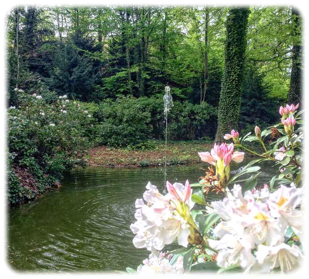 Im Park des Lingnerschlosses findet der aufmerksame Besucher einen Teich, in und an dem sich Blumen wie auch Amphibien wohlfühlen. Foto: Heiko Weckbrodt