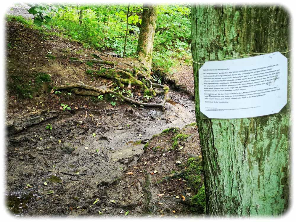Naturschützer haben rings um den Bergmolchteich Rochwitz Schilder angebracht, um Kinder davon abzuhalten, Staudämme zu bauen. Foto: Heiko Weckbrodt