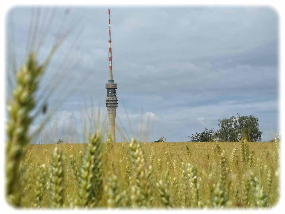 Der Fernsehturm in Dresden-Wachwitz. Foto: Heiko Weckbrodt