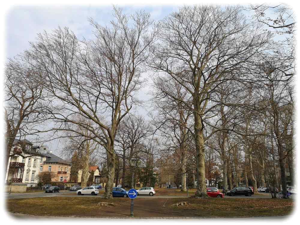 Der Friedensplatz Dresden Blasewitz. Neben einer Sanierung steht auch zur Debatte, das Parken auf dem querenden Teilstück der Mendelssohnallee zu verbieten, um die Wegebeziehungen des kleinen Park wieder herzustellen. Foto: Heiko Weckbrodt
