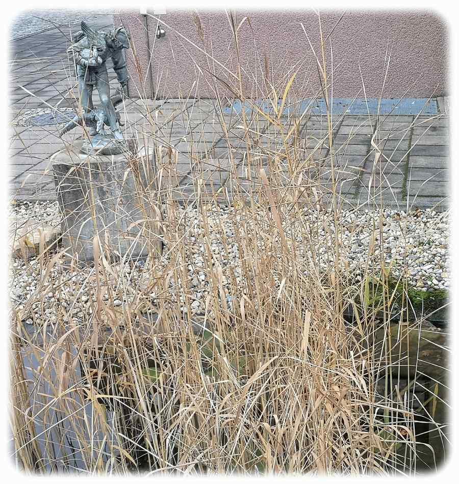 Wer hat sich denn da im Garten der alten Feuerwache versteckt? Der Gänsedieb von Striesen. Foto: Heiko Weckbrodt