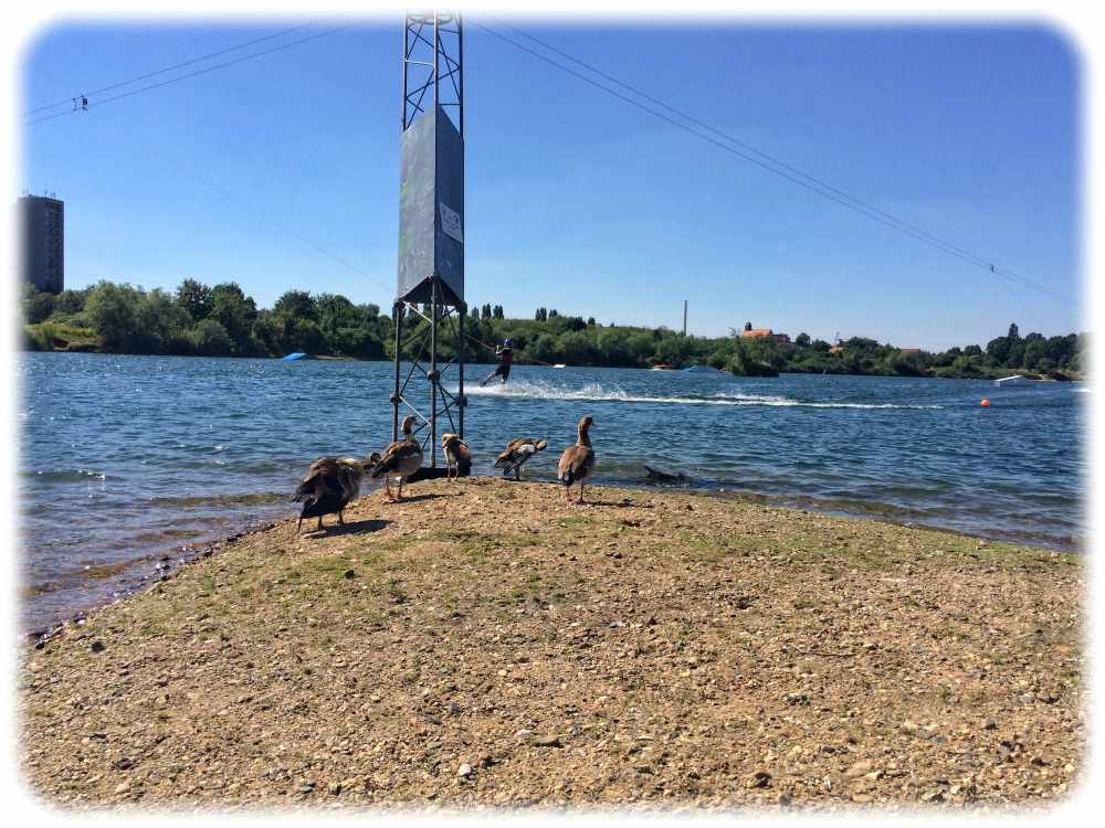 Auch die Belange der Wasservögel möchten bei einem Kompromiss für die Kiesgruben in Leuben bedacht sein. Archivfoto: Heiko Weckbrdt